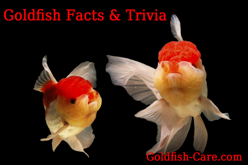 goldfish facts & trivia
